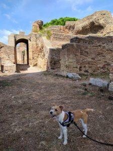 Lei è MeLa, la mia adorata jackina che dal 2015 mi accompagna tra aree archeologiche, musei ed eventi, per questo prima ArcheoDogInfluencer per OsservArcheologiA. In questa foto siamo in visita al Parco archeologico di Ostia Antica.
